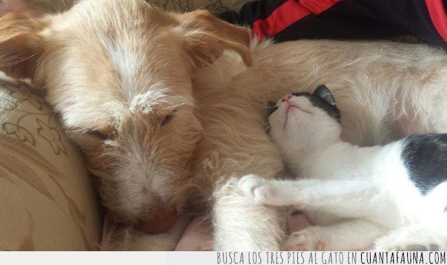 amigos,gatos,perros