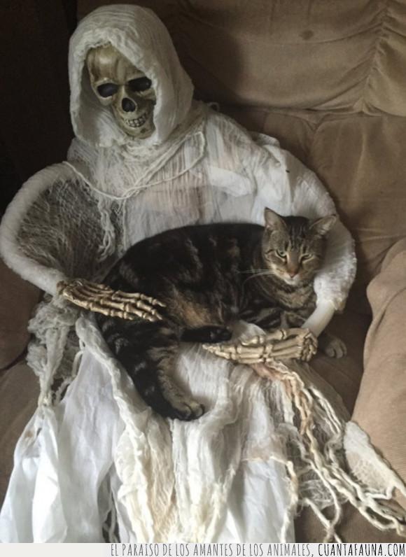 dormir,esqueleto,gato,regazo
