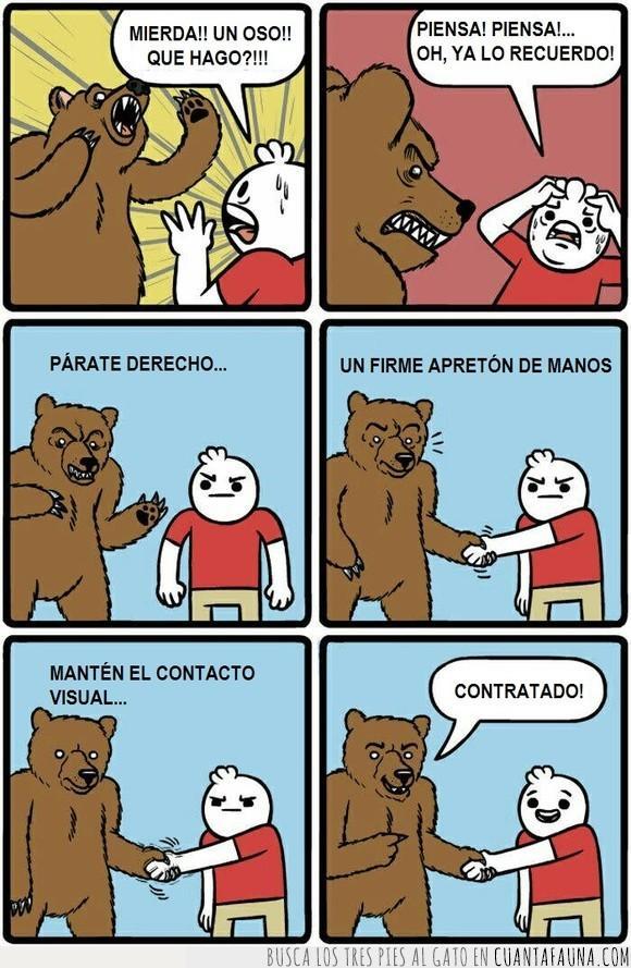 entrevista,oso,peligro,trabajo