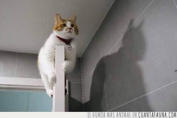 batman,gato,puerta,sombra