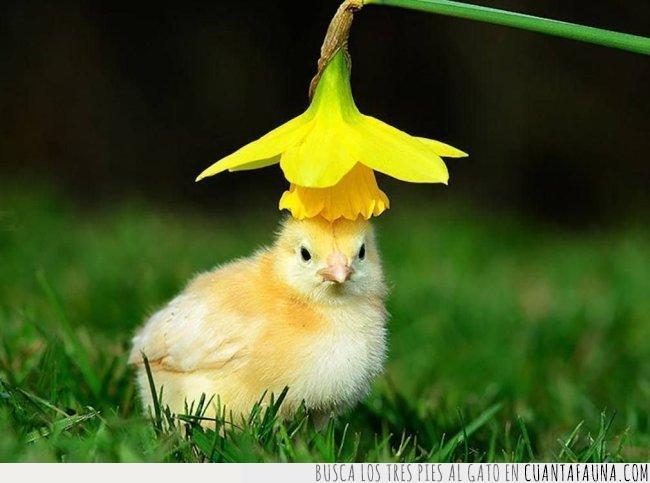 amarillo,flor,mejor,nunca,pájaro,pollo,sombrero,ver