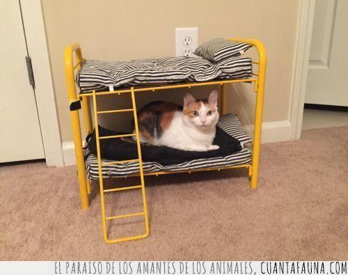 amarillo,cama,colchón,dormir,gato,hora,litera,metálico,meter,miniatura,tarde