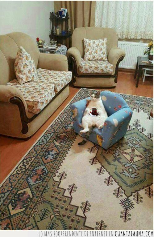 alfombra,beber,británico,gato,hora,inglés,merienda,mueble,pequeño,salón,sentado,sentar,sillón,té,tomar