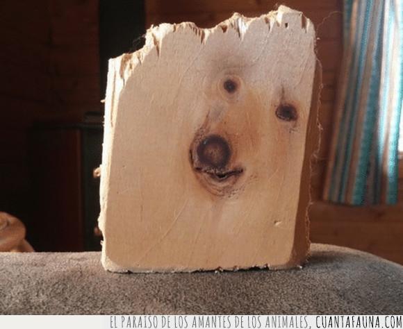 madera,perro,reencarnación