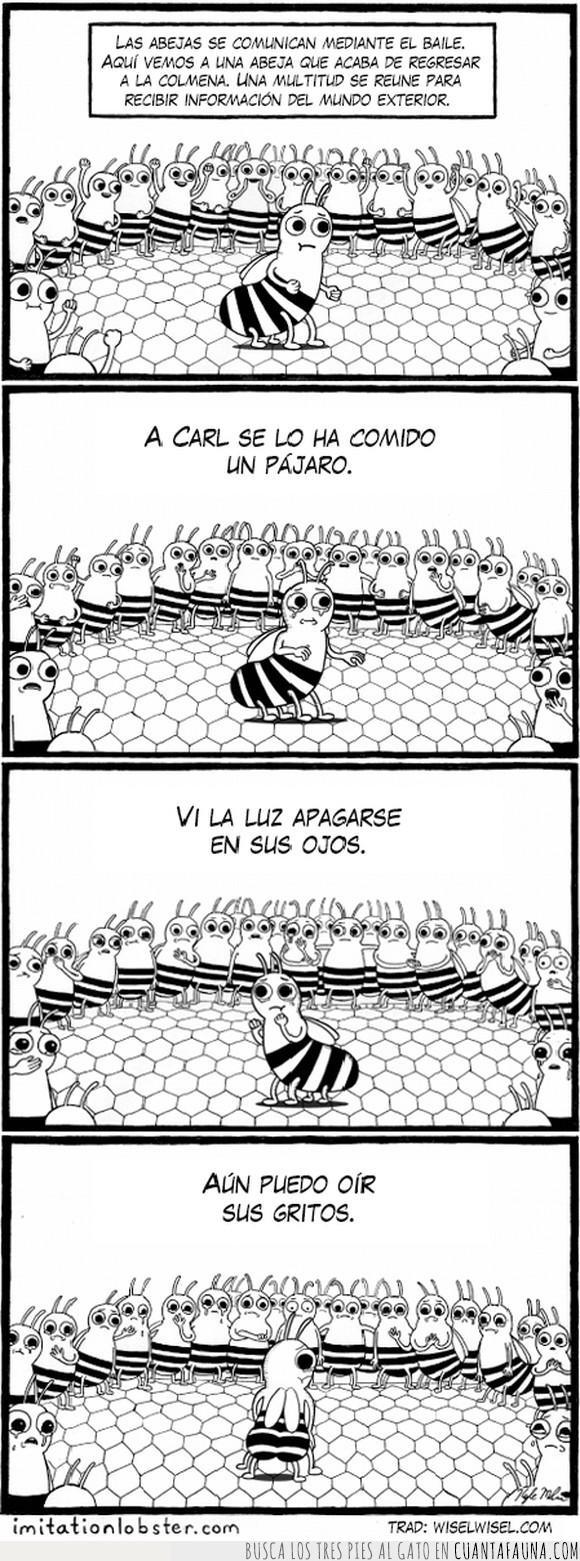 abeja,bailar,comunicación