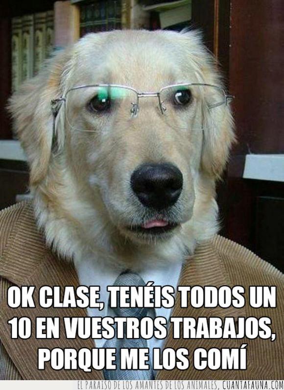 maestro,perro,profesor