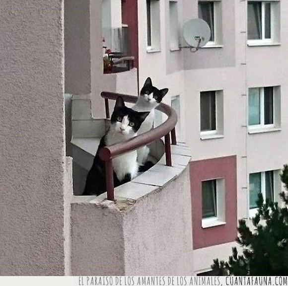 balcón,chafarderos,cotillas,gatos