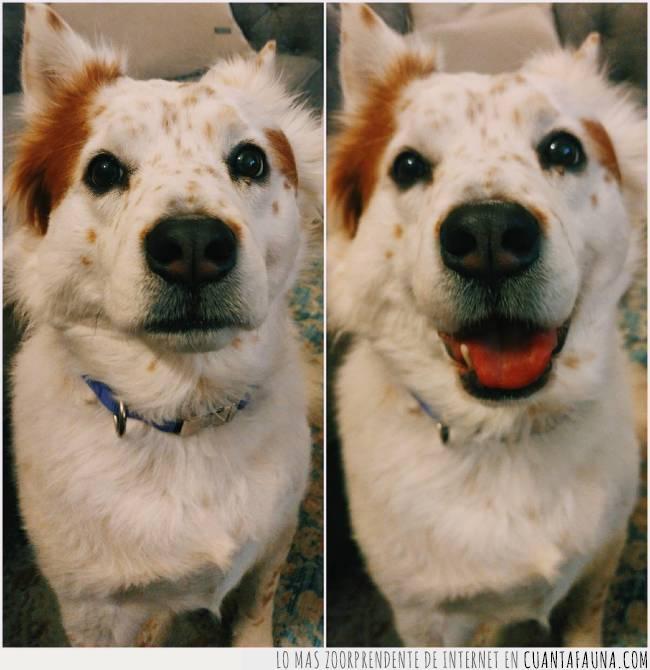 antes,buena chica,cara,comparación,decir,después,feliz,perra,sonreír
