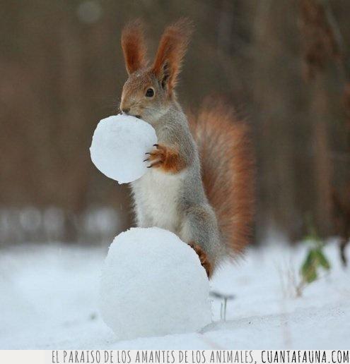 ardilla,bola,hacer,muñeco,nieve,temporada