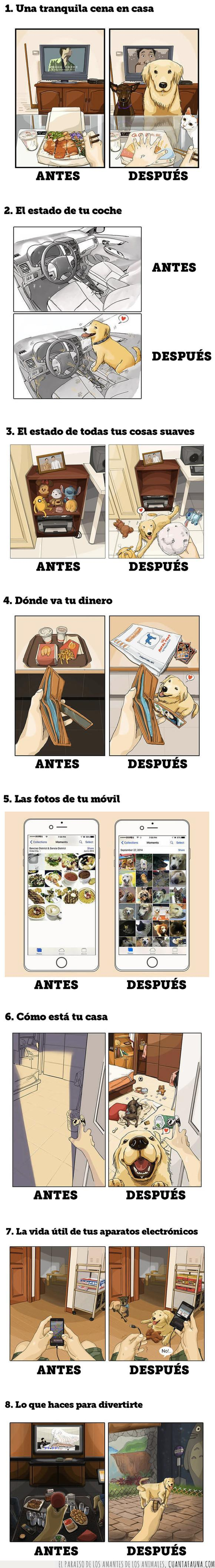 antes,después,mascota,perro