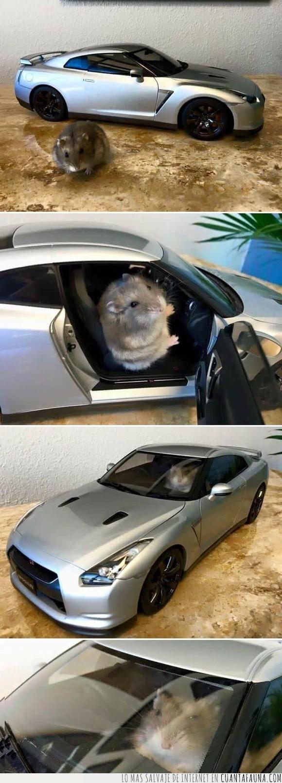 deportivo,Hamster,professional drifting
