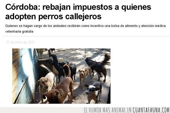 Argentina,Córdoba,impuestos,perros