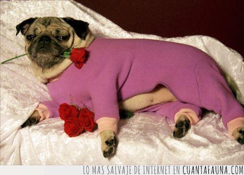 amor,boca,día,enamorados,flor,jersey,mañana,pareja,rosa,san valentín,seducción,seductor