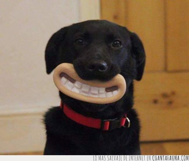 adorable,animación,boca,perro,personajes,plastilina,sonrisa,Wallace & Gromit