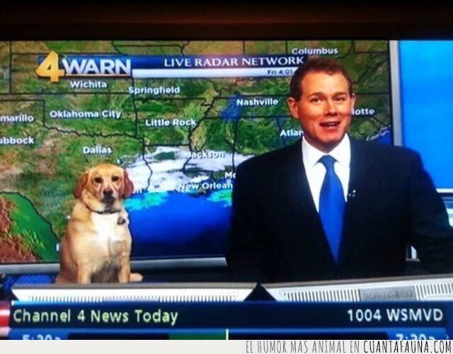 mesa,noticias,perro,presentador,tele,telediario