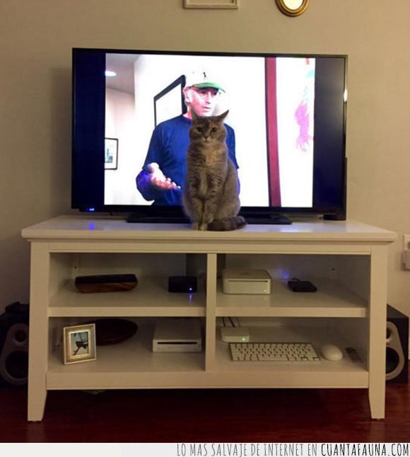 comida,gato,pedir,televisión,tv