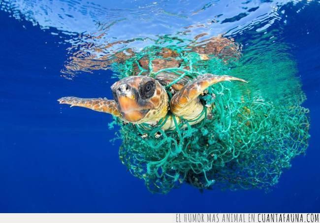 concurso,foto,fotografía,fotografo,Francis Pérez,ganadora,internacional,mar,marina,premio,red,tortuga,world press