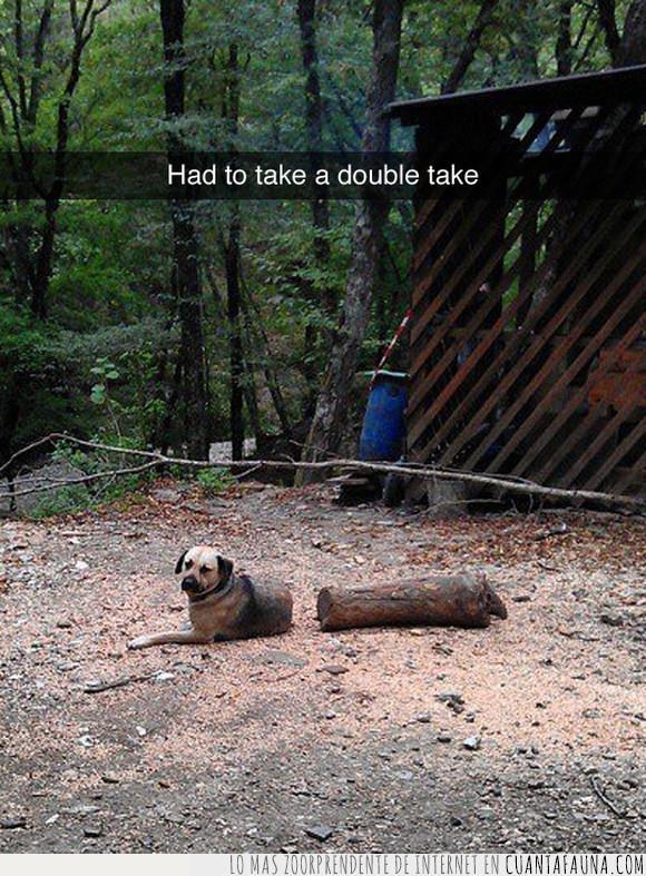 can,ilusión,leño,madero,óptica,perro