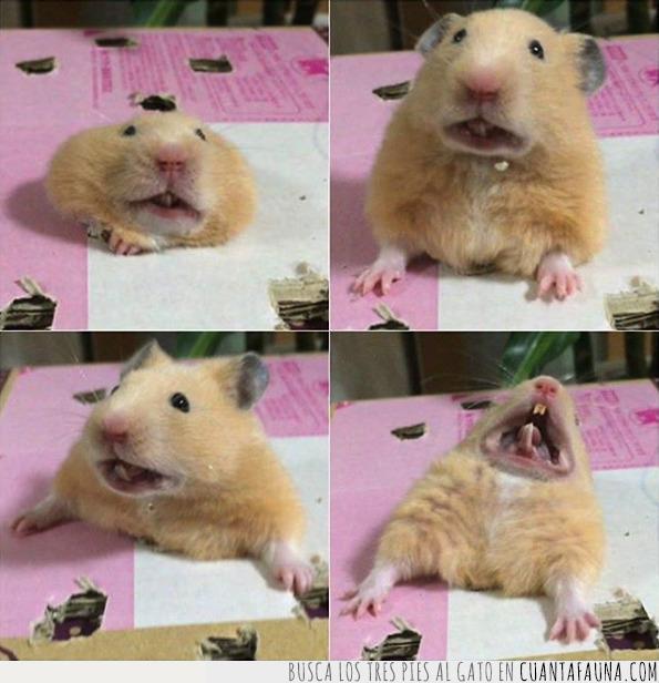 agujero,cara,dignidad,esfuerzo,hamster,intentar,pantalones,perder,pitillo,poner,salir