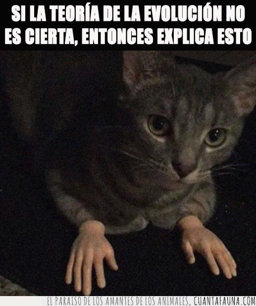 dedos,estudiar,evolución,gato,humano,manos,mutar,patas,selectividad,teoría