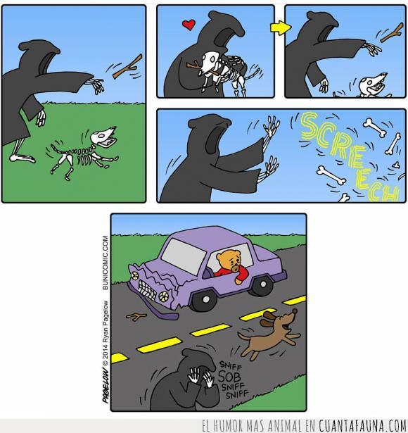 atropello,coche,muerto,perro