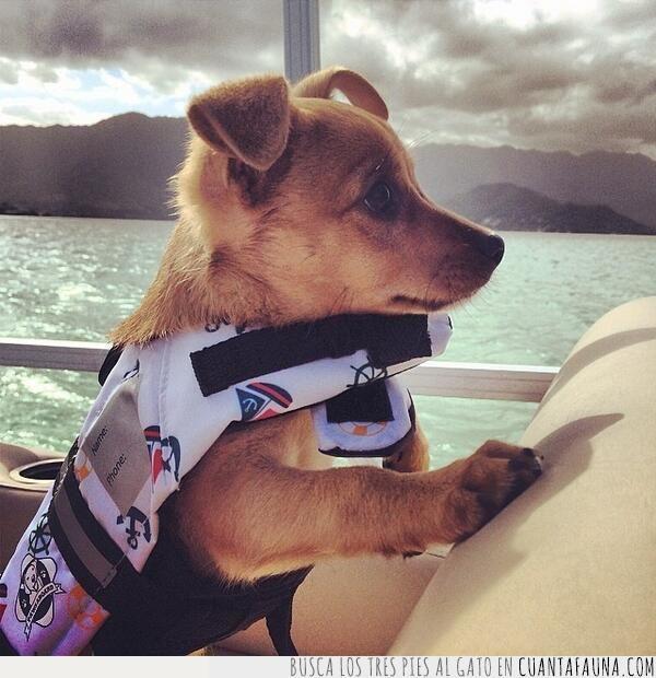 cachorro,chaleco,embarcación,mar,marinero,navegar,nubes