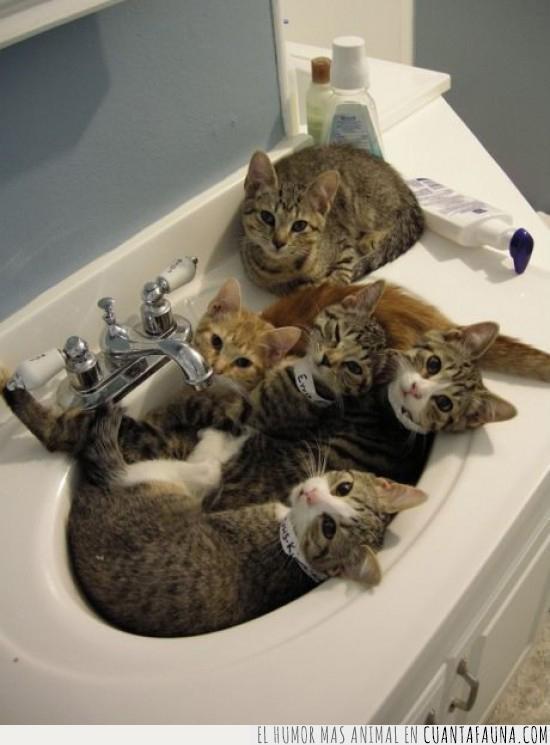 baño,esperar,gatos,impedir,lavar,manos