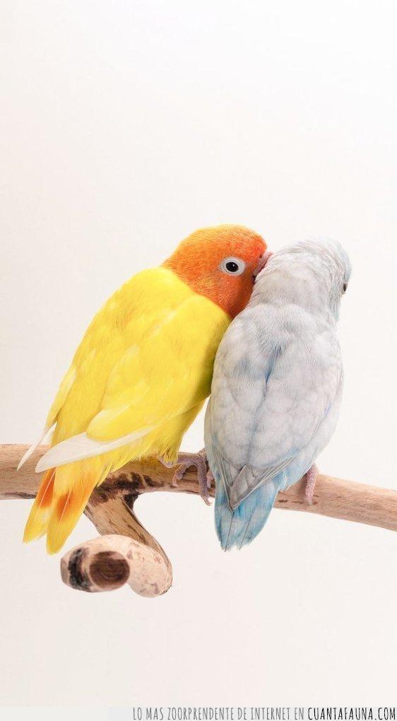 amor,azul,besos,buenos días,naranja,pájaros,pico,rama,saludar