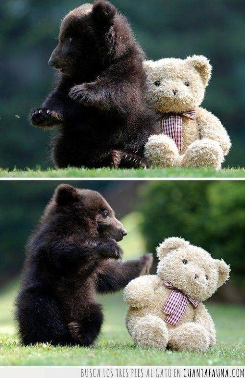 cachorro,doble,dos,juguete,oso,peluche,ración,teddy