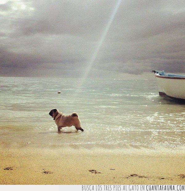 creación,decir,dios,luz,mar,paseo,playa,pug,rayo,raza