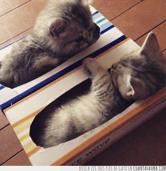 caja,gatos,kleenex,llorar,mocos,necesitar,pañuelos,papel,realmente,secar,sonar
