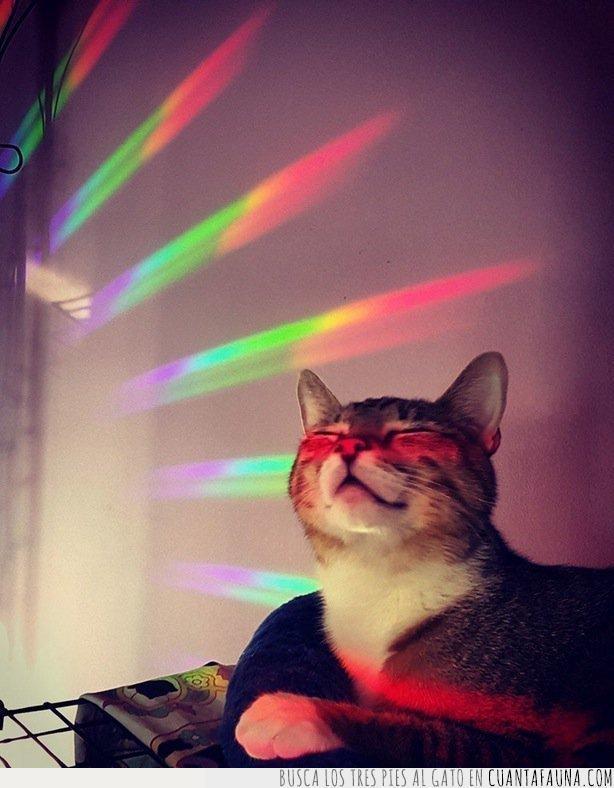 arcoíris,bello,conspirar,gato,imagen,luz,rayos,universo