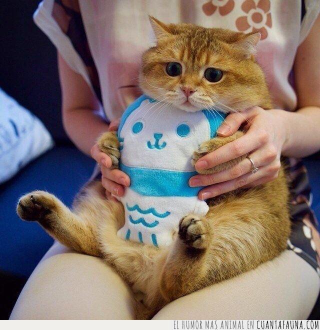 azul,babero,comer,comida,gato,gordo,marrón,naranja,pescado,sentado