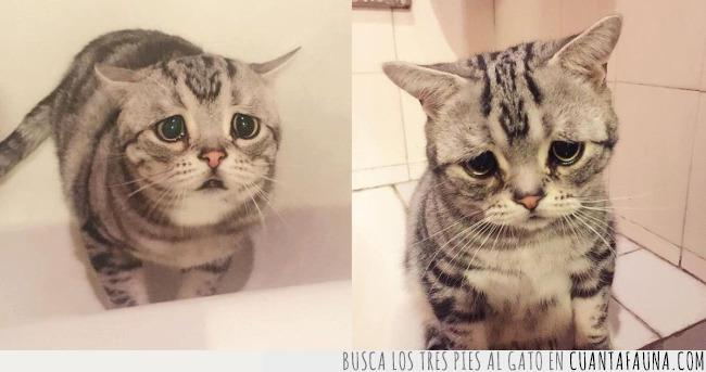 bañera,cara,contar,gato,hacer,triste