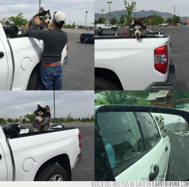 camioneta,gafas,husky,montar,ojos,perro,protección,secar,tía