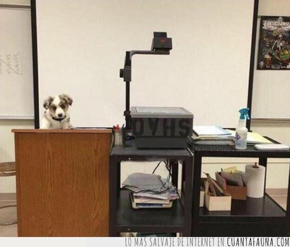 clase,perro,profesor