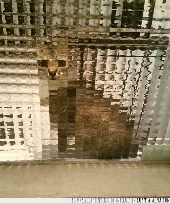 baja,calidad,cristal,gato,imagen,pixel,pixelado,resolución,ventana,viselado
