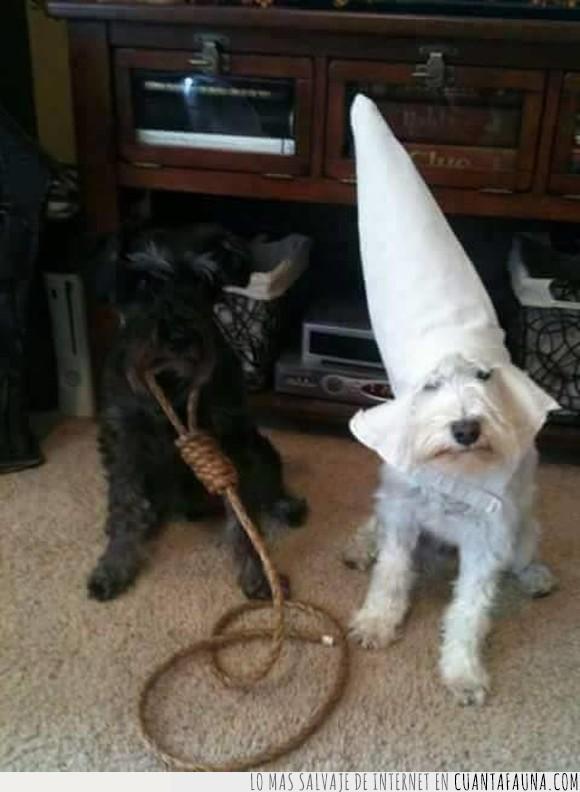 blanco,Ku kux Clan,negro,par,pareja,perros
