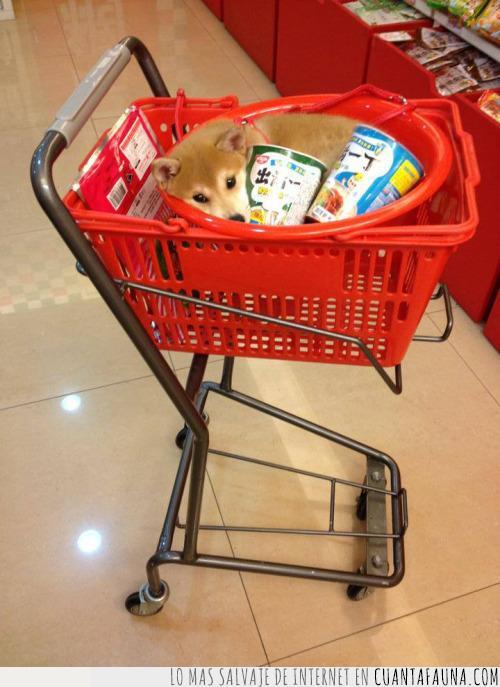 caprichos,carrito,carro,cesta,compra,fideos,llenar,noodles,perro,shiba