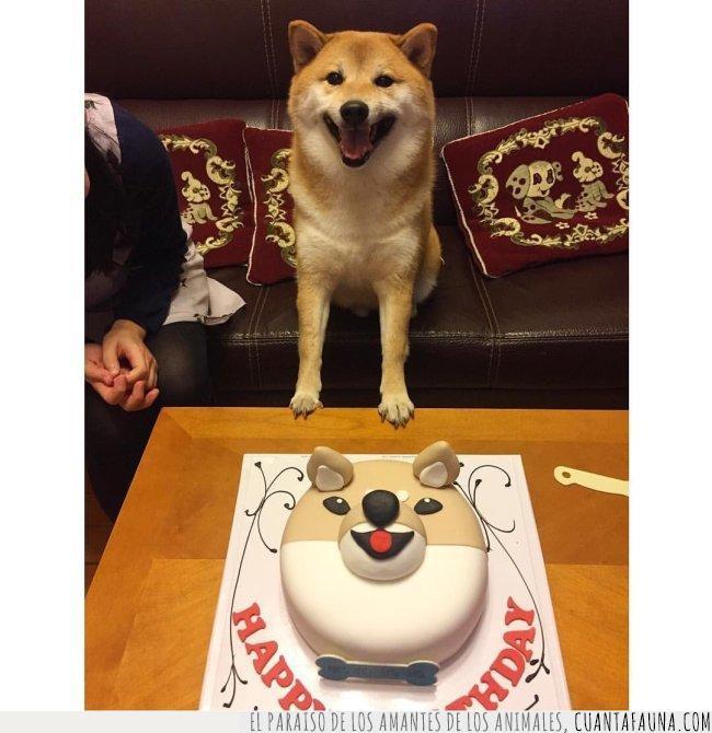 años,birthday,celebrar,contento,cumplir,gusto,inu,japonés,pastel,shiba