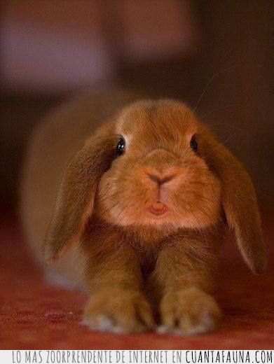 bostezo,conejo,desperezar,dientes,estirar,patas,pereza,sueño
