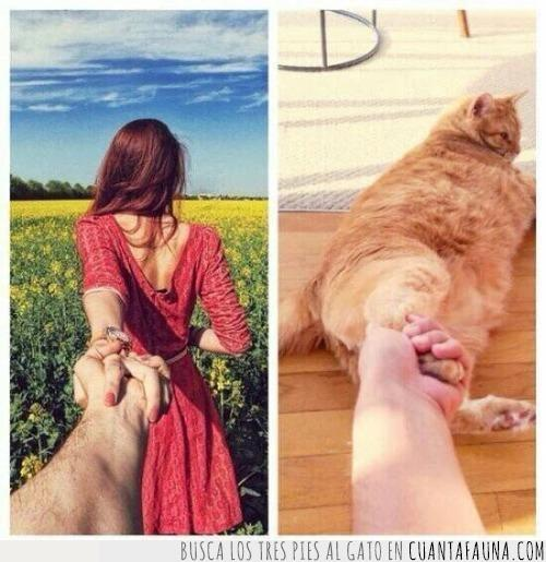campo,chica,chico,flores,foto,gato,instagram,mano,moda,novia,novio,pareja,pata