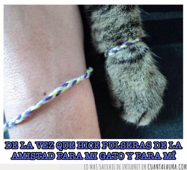 amistad,bonito,colores,gato,hilo,pata,pulsera,trenza