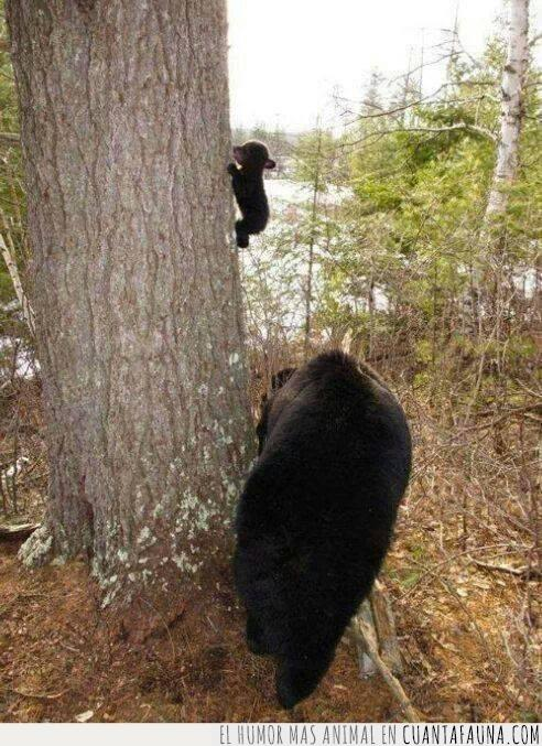 árbol,cachorro,cría,emocionados,escalar,niño,oso,primer,tronco