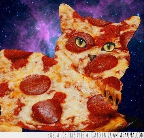 gato,montaje,photoshop,pizza,universo