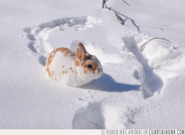 conejo,manchas,nieve,notar,primavera