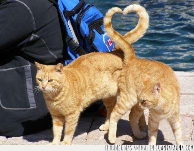 amar,cola,corazón,gato,mayor,muestra,verdad