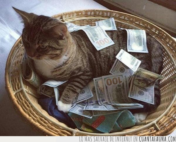 billetes,cesto,dinero,gato,make it rain,propina
