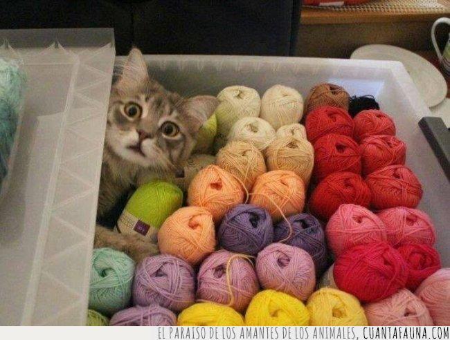 asustar,cabeza,caja,colores,coser,esconder,gato,hilos,paraíso,sorpresa,susto