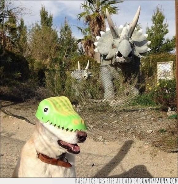 cv,dinosaurio,gorro,mentir,perro